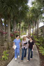 3 students walking along a path surrounded by palm trees