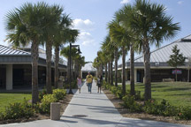 SCF Venice campus path between buildings lined with palm trees